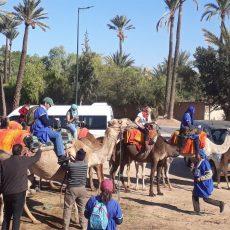 balade-en-chameau-a-marrakech